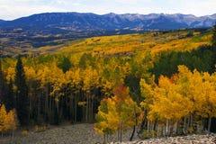 Osikowi spadków kolory Kolorado ` s Ohio Przechodzą Fotografia Royalty Free