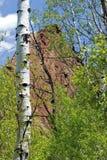 Osikowy drzewo w Telluride zdjęcie stock