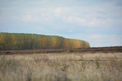 Osikowy las w jesieni barwi przez od Środkowego Oregon pola obrazy stock