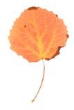 Osikowy liść odizolowywający Zdjęcia Royalty Free