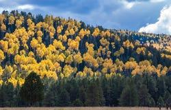 Osikowy wzgórze Obraz Stock