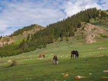 Osioł i konie pasa na zboczu przeciw tłu o Zdjęcie Stock