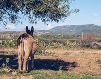 Osio? patrzeje nad panoram? w Sardinia pod drzewem zdjęcia stock