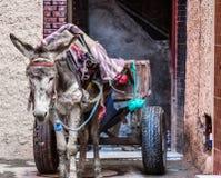 Osioł w furze przy ulicą grodzki czekanie dla ładunku, Morocco zdjęcie stock