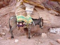 Osioł w Petra zdjęcie royalty free