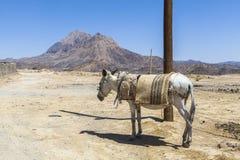 Osioł w Kharanagh wiosce, Iran Fotografia Stock