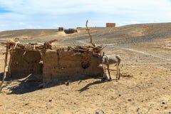 Osioł w saharze, Maroko, Afryka Zdjęcia Royalty Free