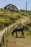 Osioł w wsi Obrazy Royalty Free