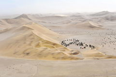 Oásis do deserto Imagem de Stock Royalty Free