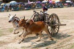 Oskar die in Thailand rennen Stock Foto's
