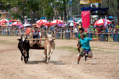 Oskar die in Thailand rennen Royalty-vrije Stock Foto's