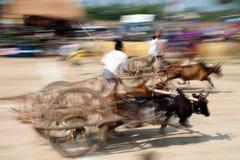 Oskar die in Thailand rennen Royalty-vrije Stock Afbeelding