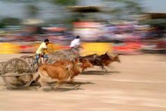 Oskar die in Thailand rennen Stock Foto