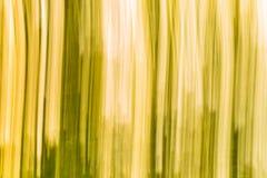 Oskarp abstraktion av den naturliga skogen Arkivfoto