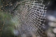 Oskarp bakgrund av naturlig dagg på spindel förtjänar Arkivbild