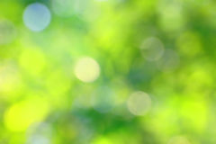 Oskarp grön bakgrund Royaltyfria Bilder