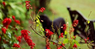 Oskarp hund i trädgård Fotografering för Bildbyråer