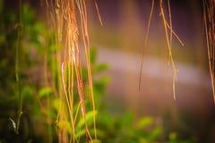 Oskarp luft rotar av banyanträd på den gröna sidabakgrunden Fotografering för Bildbyråer