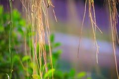 Oskarp luft rotar av banyanträd på den gröna sidabakgrunden Arkivbilder