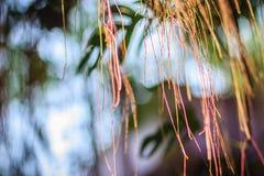 Oskarp luft rotar av banyanträd på den gröna sidabakgrunden Royaltyfria Bilder
