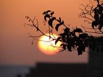 oskarp solnedgång Royaltyfria Foton