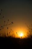 Oskarp solnedgång med gras Arkivbilder