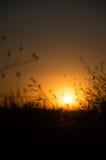 Oskarp solnedgång med gras Royaltyfri Foto