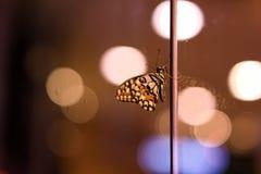 Oskarpa ljus för fjärilsbakgrundsbokeh i nattetid med färger av ljus royaltyfria bilder