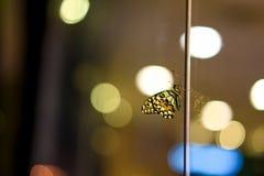 Oskarpa ljus för fjärilsbakgrundsbokeh i nattetid med färger av ljus arkivfoto