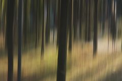 Oskarpa träd i trän Royaltyfria Foton