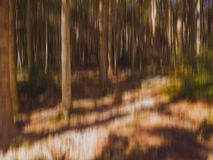 Oskarpa träd, trä, skogbakgrund med banan, solljus Härlig natur i nedgången, höst royaltyfria foton