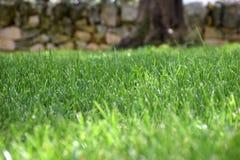 oskarpt gräs Royaltyfri Foto