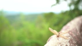 Oskrzydleni termity zbiory