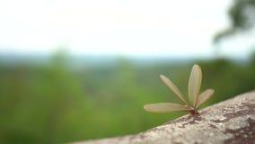 Oskrzydleni termity zbiory wideo