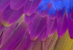 Oskrzydlona ara (aronu chloropterus) Fotografia Stock