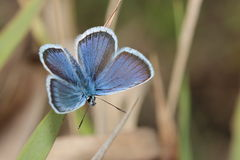 Oskrzydlony motyl zdjęcia royalty free