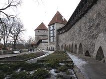 Oskulder står högt i stadsväggen, Tallinn arkivfoton