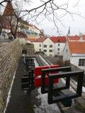 Oskulder står högt i stadsväggen, Tallinn royaltyfri bild