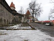 Oskulder står högt i stadsväggen, Tallinn royaltyfri foto