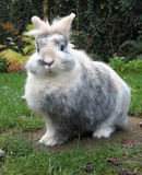 oskyldig kanin Royaltyfri Bild