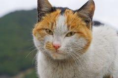 Oskyldig katt arkivbild
