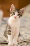 oskyldig kattunge Arkivbild