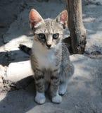 Oskyldiget behandla som ett barn katten royaltyfria foton