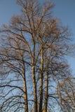 Oslo - árvores contra um céu azul Imagem de Stock Royalty Free