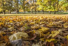 Oslo - a carpet of autumnal leaves. Stock Image