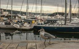 Oslo-fiordo, gabbiano e le barche Fotografie Stock