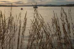 Oslo-fjord, golden waters of the fjord and some reed on the shore. This image shows a view of Oslo - golden waters of the fjord through some reed growing on the Royalty Free Stock Image