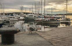 Oslo-fjord, seagull and the boats at sunset. royalty free stock image