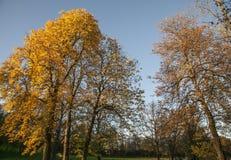 Oslo - Herbst in einem Park Stockbild