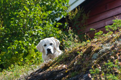 Oslo Islands Stock Photography